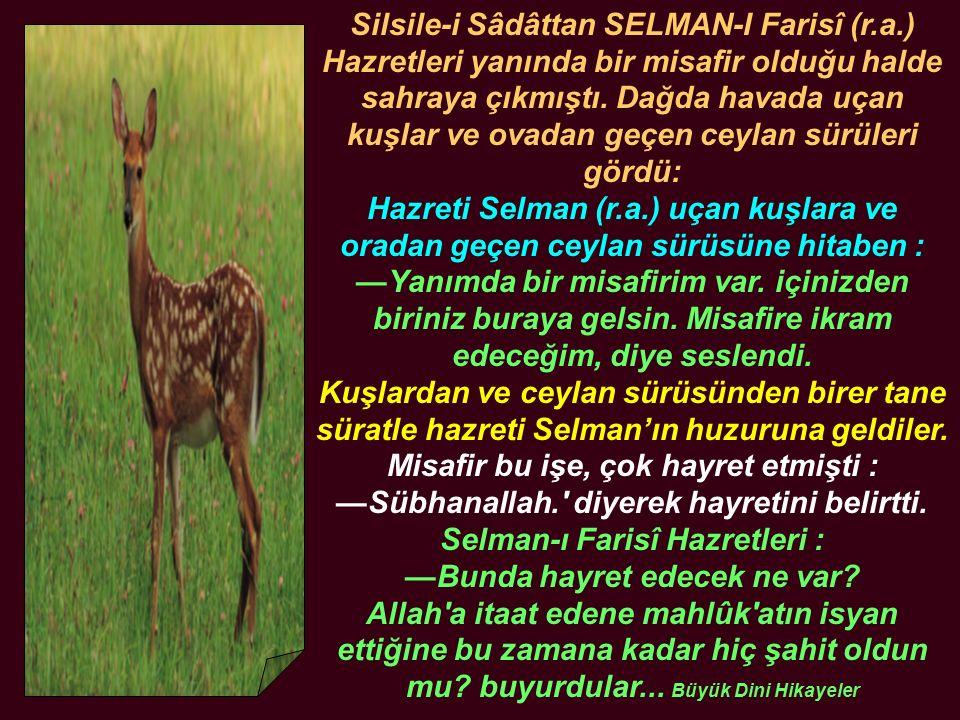 Silsile-i Sâdâttan SELMAN-I Farisî (r. a