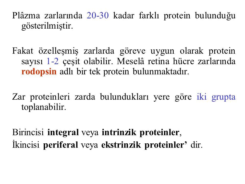 Plâzma zarlarında 20-30 kadar farklı protein bulunduğu gösterilmiştir.