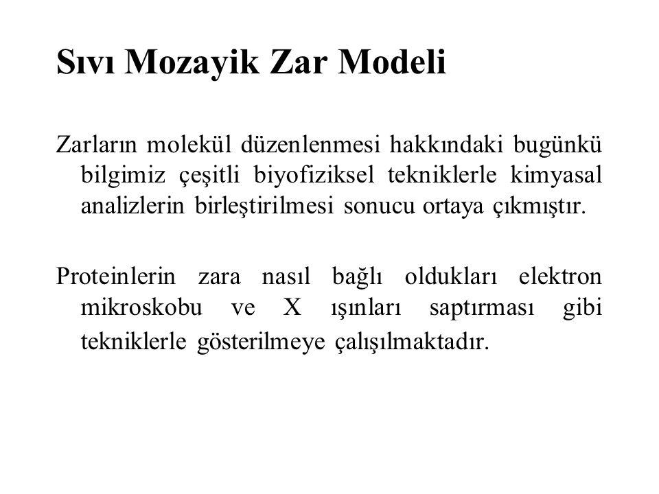 Sıvı Mozayik Zar Modeli