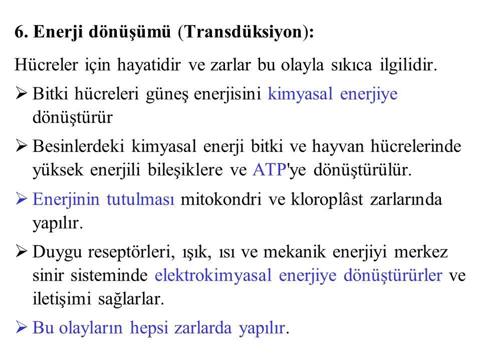 6. Enerji dönüşümü (Transdüksiyon):