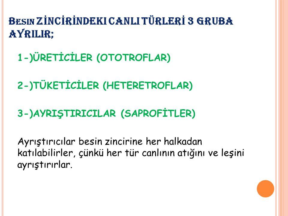 Besin ZİNCİRİNDEKI CANLI TÜRLERİ 3 GRUBA AYRILIR;