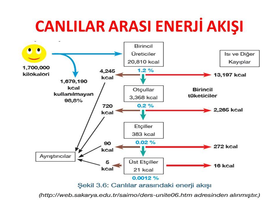 CANLILAR ARASI ENERJİ AKIŞI