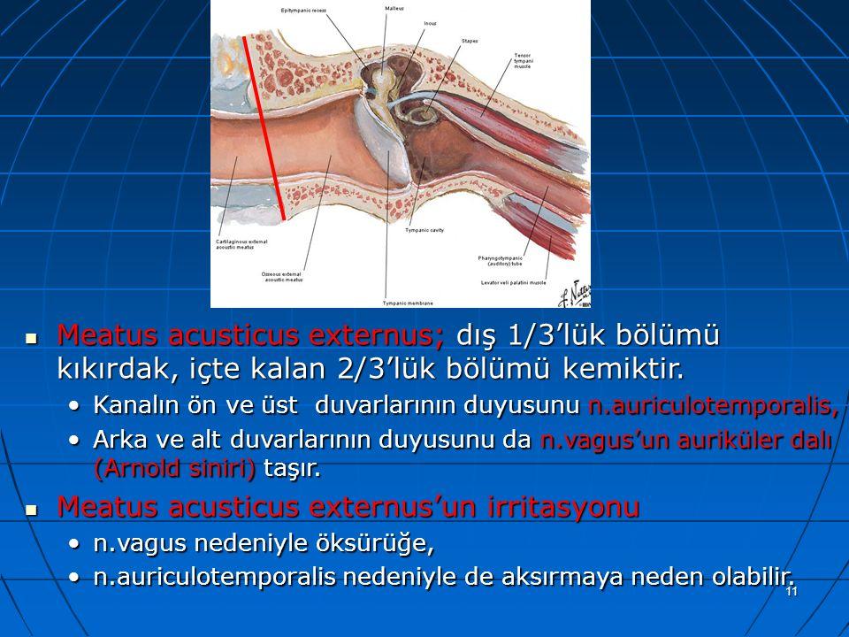 a Meatus acusticus externus; dış 1/3'lük bölümü kıkırdak, içte kalan 2/3'lük bölümü kemiktir.