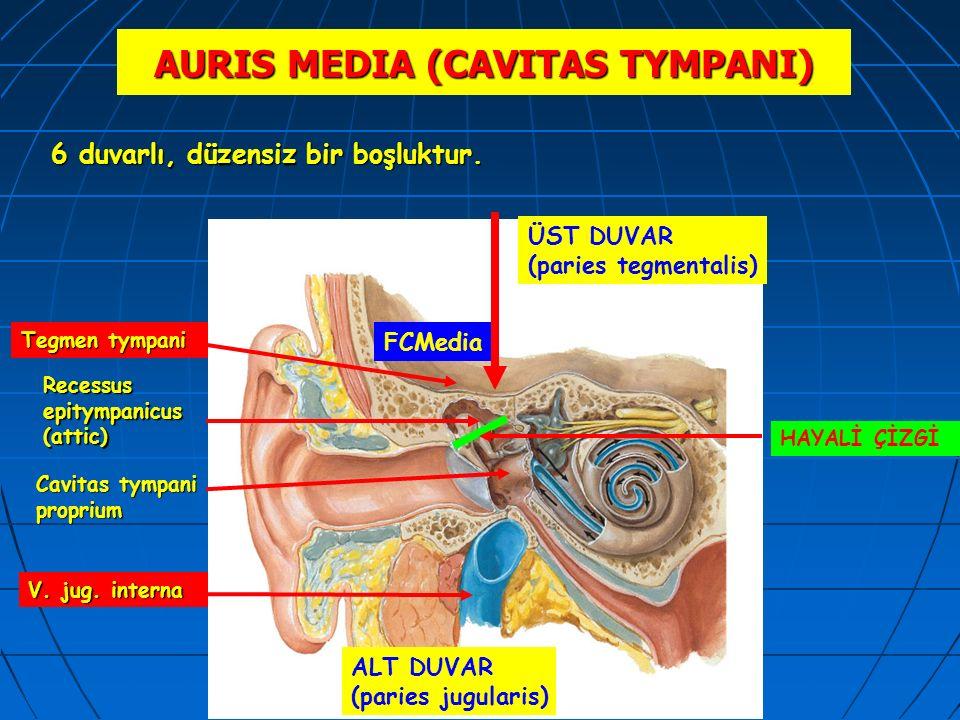 AURIS MEDIA (CAVITAS TYMPANI)