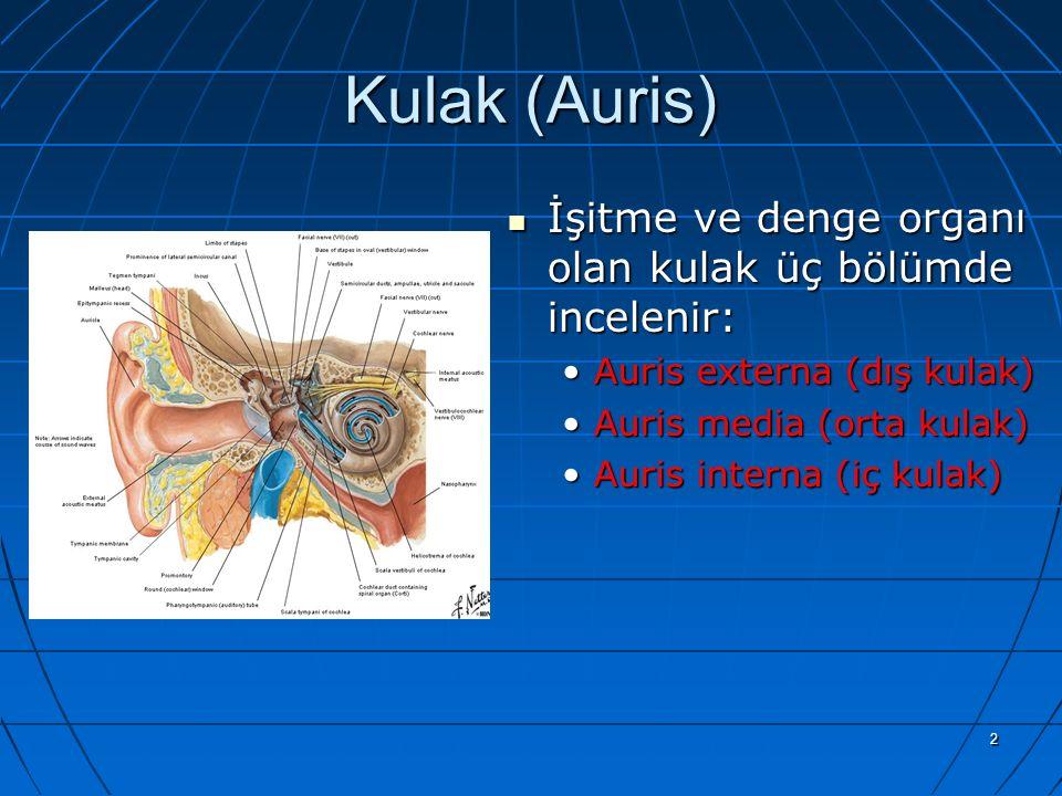 Kulak (Auris) İşitme ve denge organı olan kulak üç bölümde incelenir: