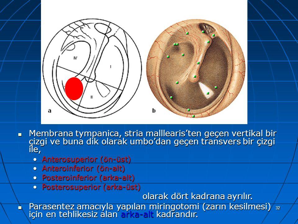 a Membrana tympanica, stria malllearis'ten geçen vertikal bir çizgi ve buna dik olarak umbo'dan geçen transvers bir çizgi ile,