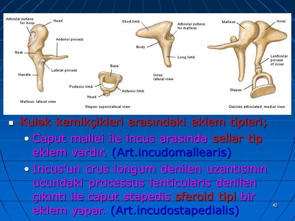 a Kulak kemikçikleri arasındaki eklem tipleri;