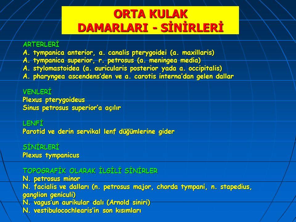 ORTA KULAK DAMARLARI - SİNİRLERİ