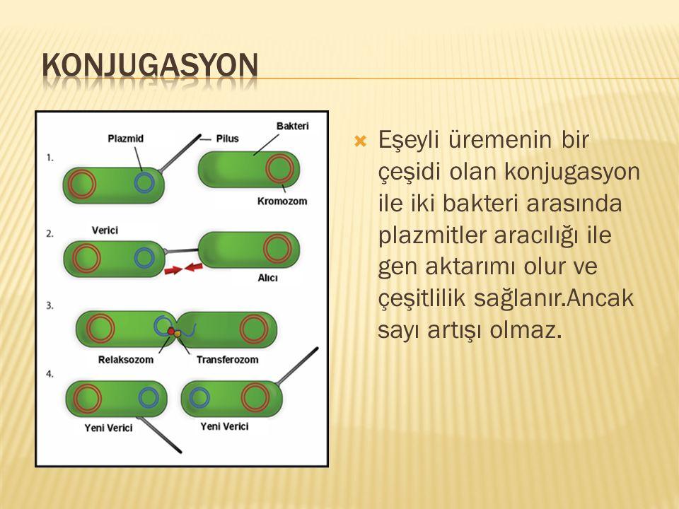 KONJUGASYON