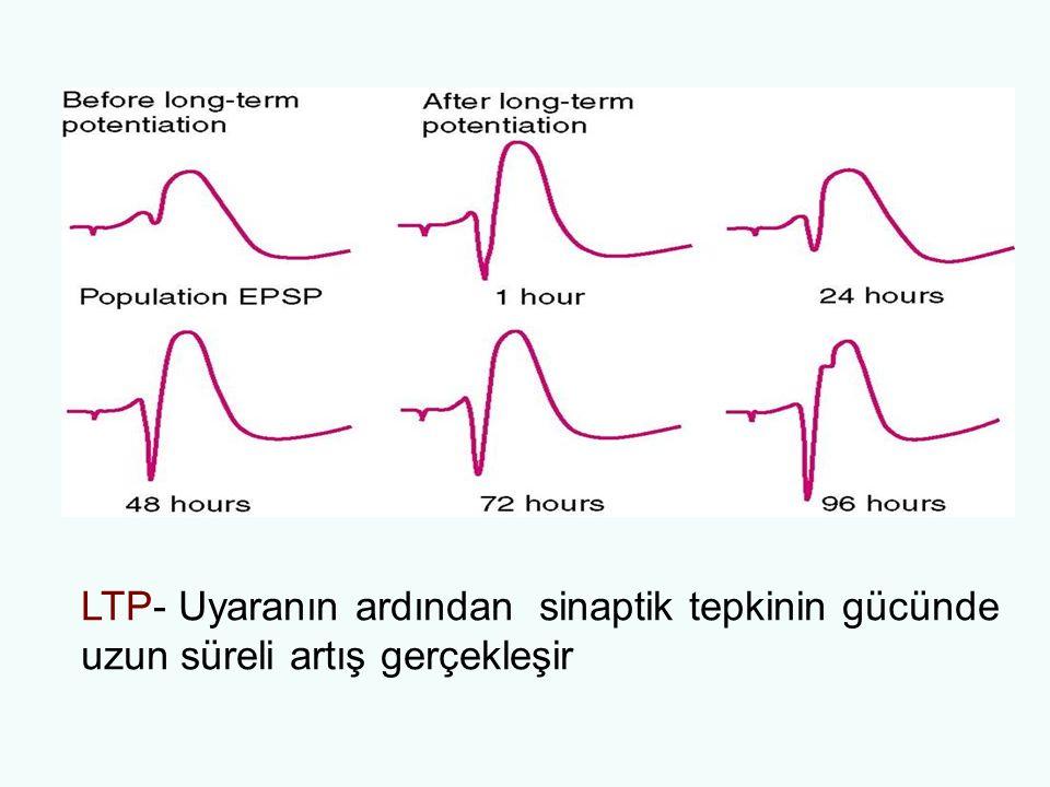LTP- Uyaranın ardından sinaptik tepkinin gücünde uzun süreli artış gerçekleşir