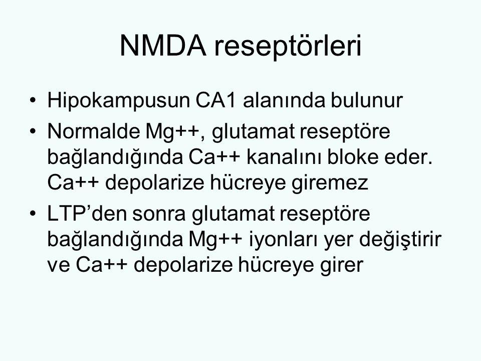 NMDA reseptörleri Hipokampusun CA1 alanında bulunur