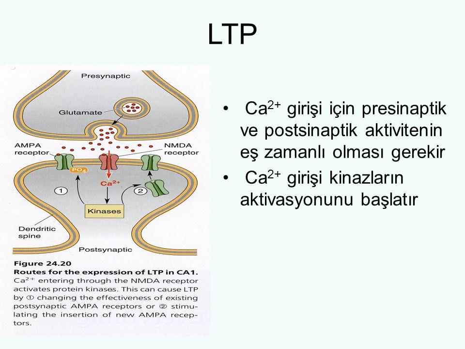 LTP Ca2+ girişi için presinaptik ve postsinaptik aktivitenin eş zamanlı olması gerekir.