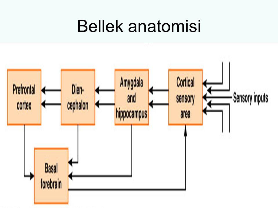 Bellek anatomisi