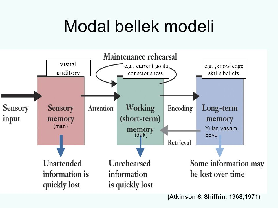 Modal bellek modeli visual auditory e.g., current goals consciousness.