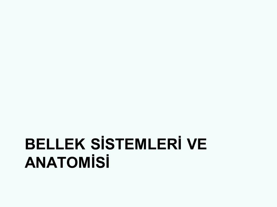 BELLEK SİSTEMLERİ VE ANATOMİSİ