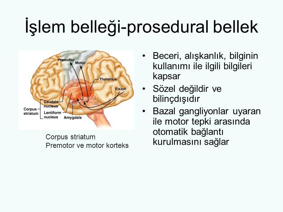 İşlem belleği-prosedural bellek