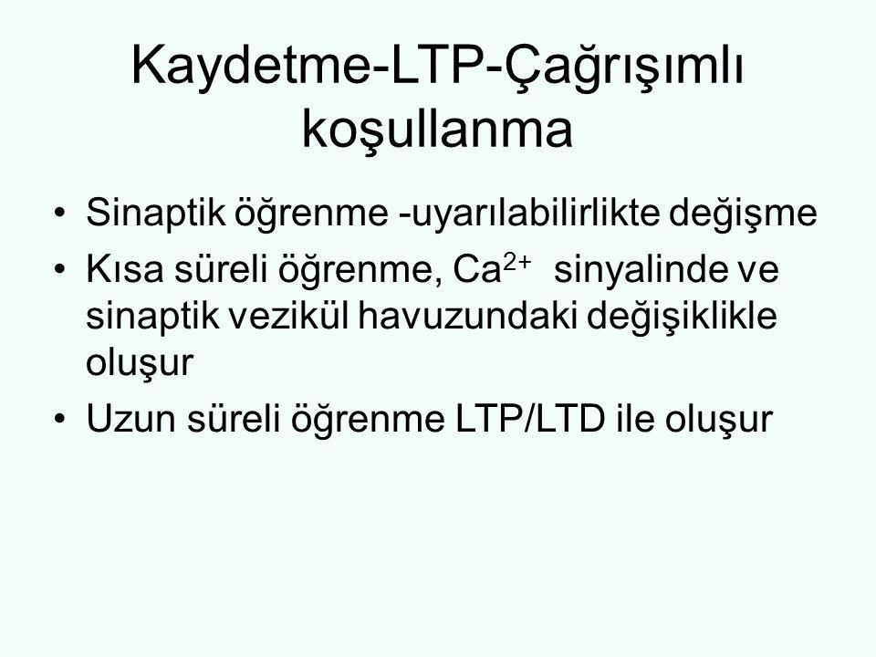 Kaydetme-LTP-Çağrışımlı koşullanma