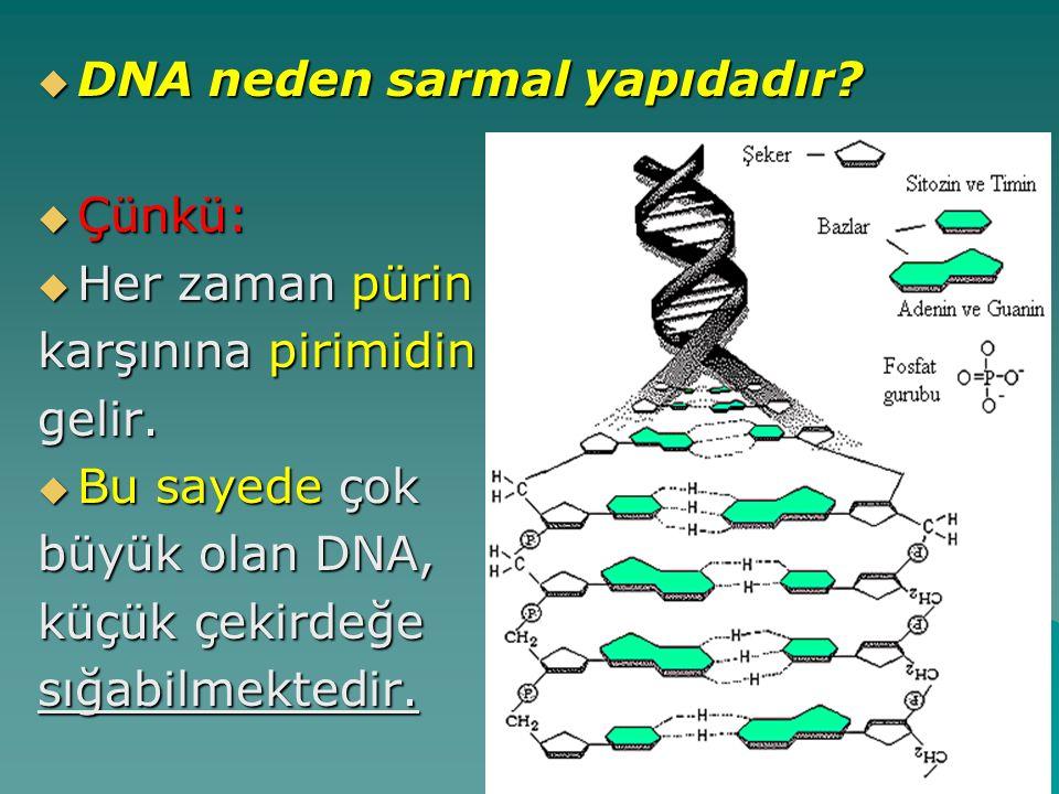 DNA neden sarmal yapıdadır
