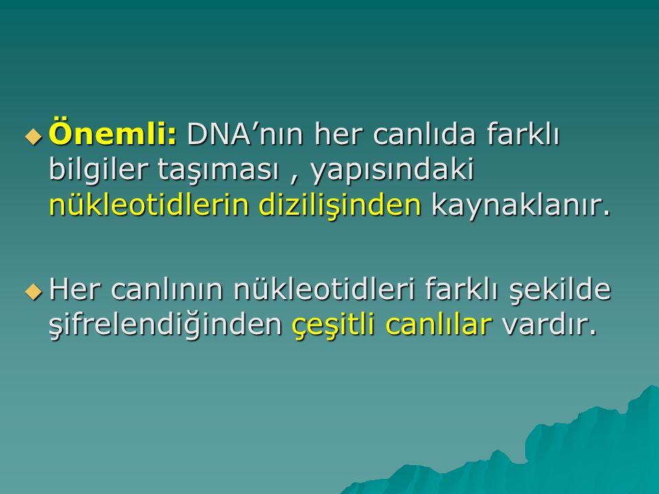 Önemli: DNA'nın her canlıda farklı bilgiler taşıması , yapısındaki nükleotidlerin dizilişinden kaynaklanır.