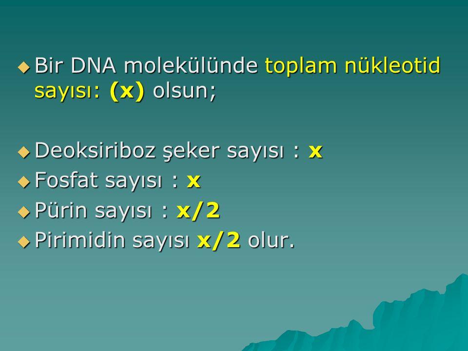 Bir DNA molekülünde toplam nükleotid sayısı: (x) olsun;