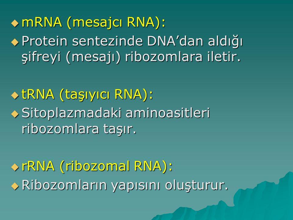 mRNA (mesajcı RNA): Protein sentezinde DNA'dan aldığı şifreyi (mesajı) ribozomlara iletir. tRNA (taşıyıcı RNA):