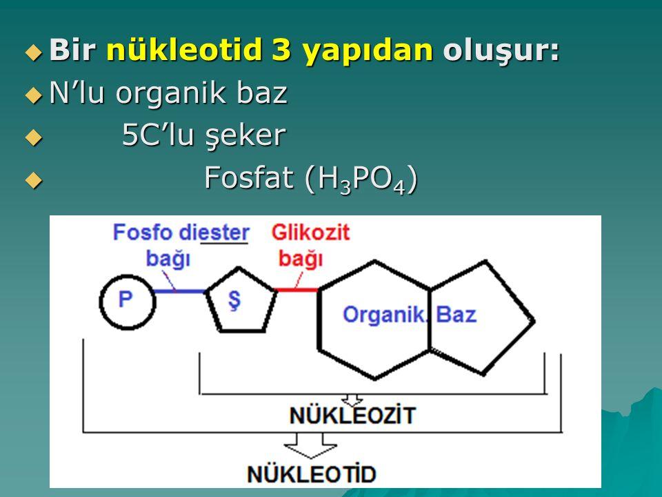 Bir nükleotid 3 yapıdan oluşur: