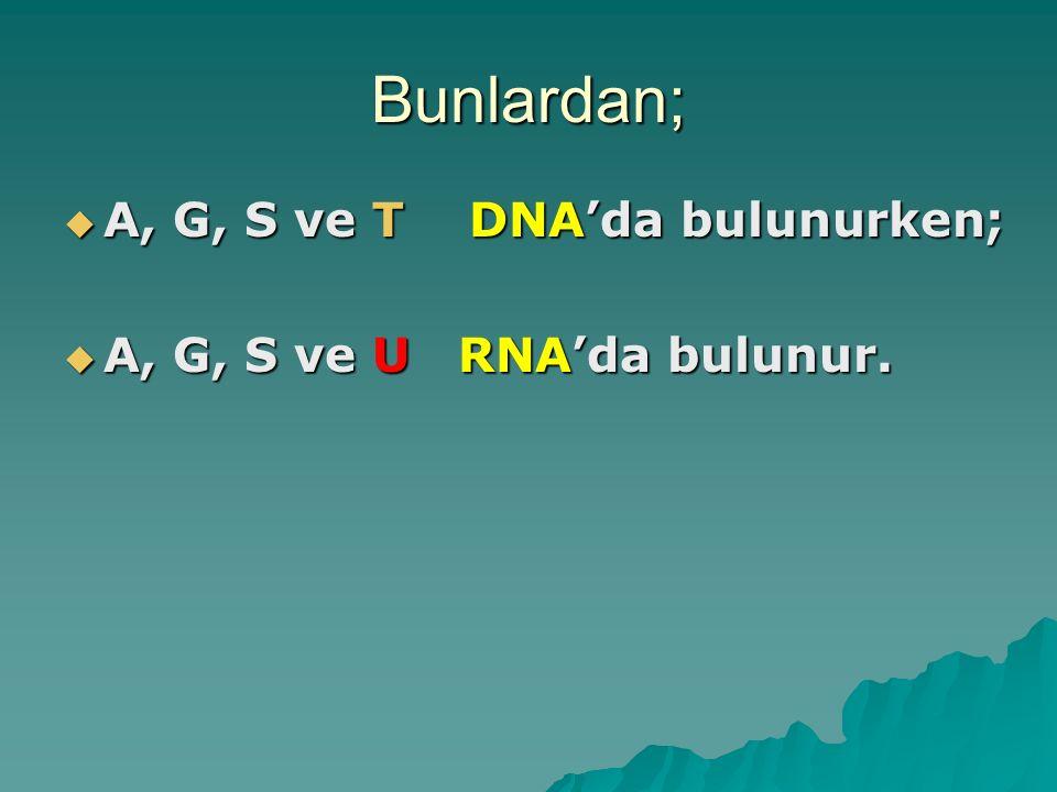 Bunlardan; A, G, S ve T DNA'da bulunurken;