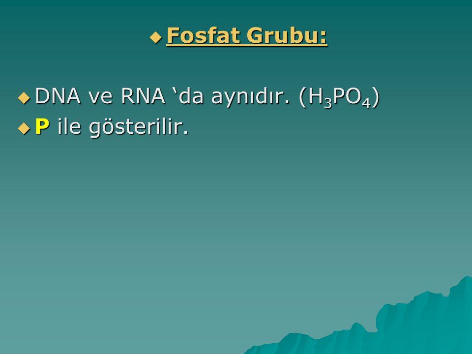 Fosfat Grubu: DNA ve RNA 'da aynıdır. (H3PO4) P ile gösterilir.