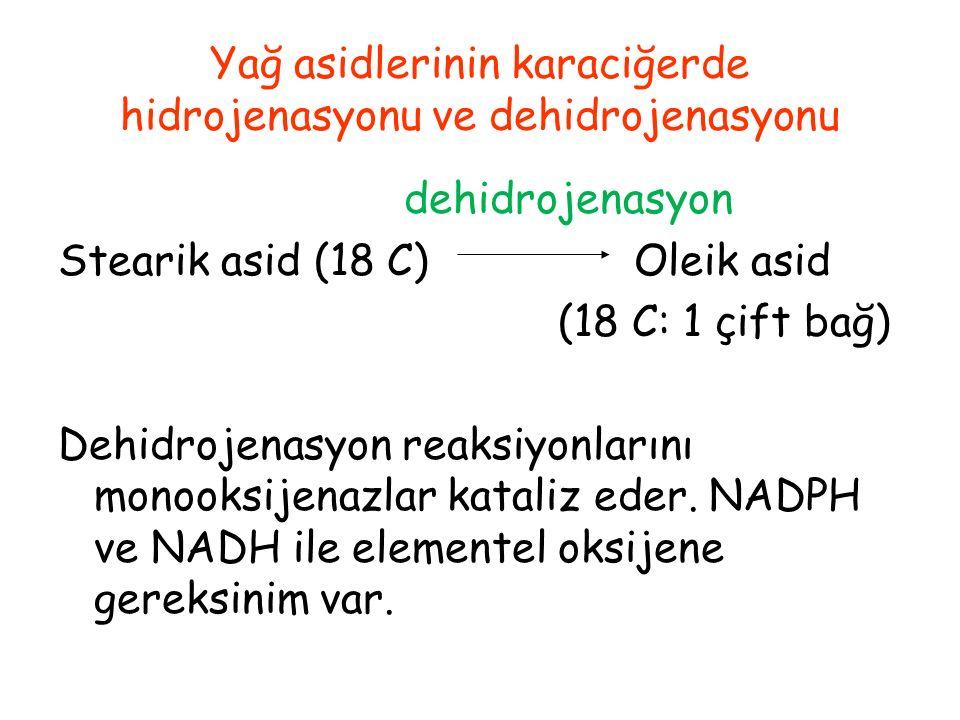 Yağ asidlerinin karaciğerde hidrojenasyonu ve dehidrojenasyonu