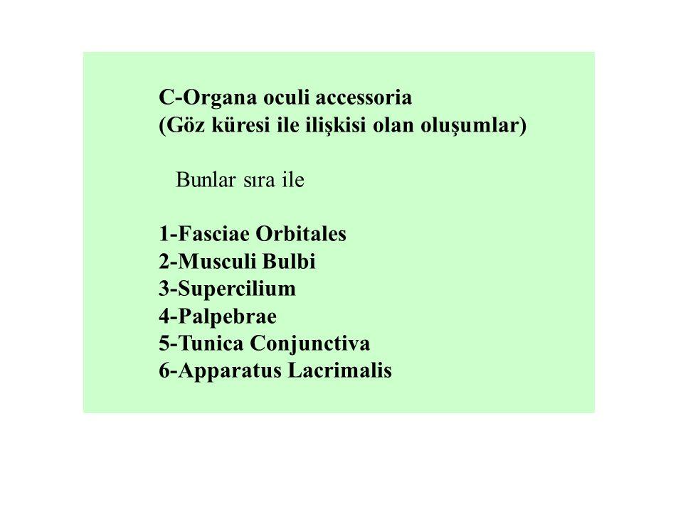 C-Organa oculi accessoria