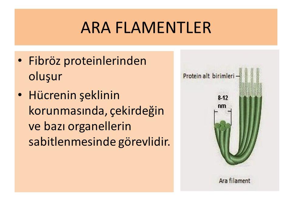 ARA FLAMENTLER Fibröz proteinlerinden oluşur
