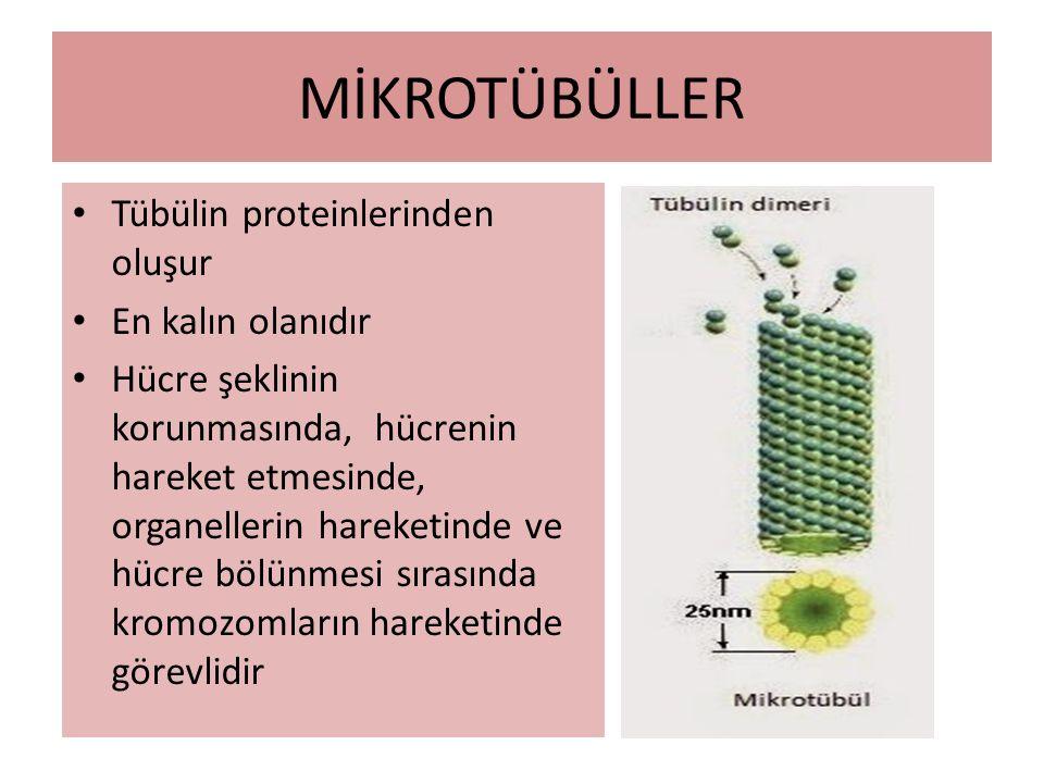 MİKROTÜBÜLLER Tübülin proteinlerinden oluşur En kalın olanıdır
