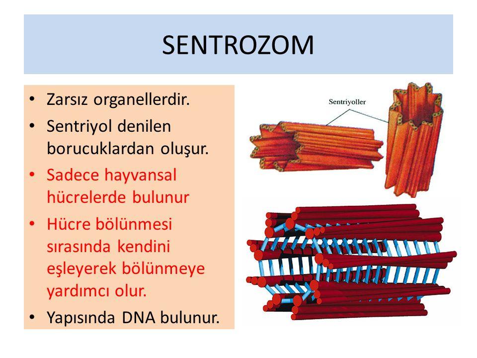 SENTROZOM Zarsız organellerdir.