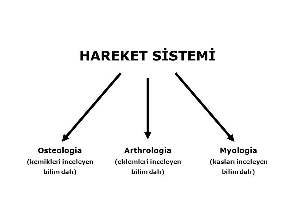 HAREKET SİSTEMİ Osteologia Myologia Arthrologia (kemikleri inceleyen