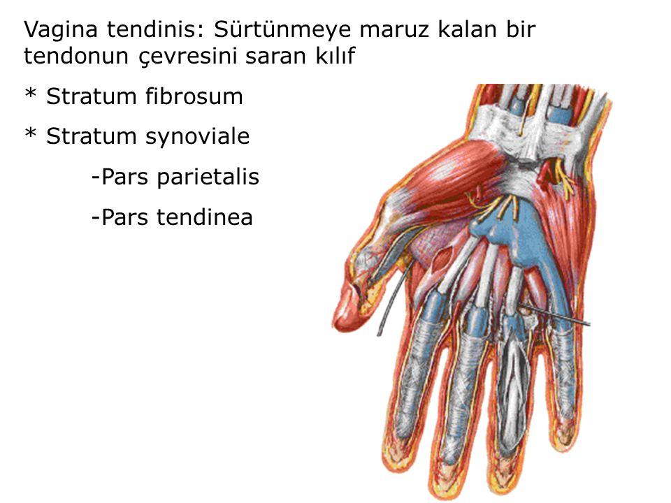 Vagina tendinis: Sürtünmeye maruz kalan bir tendonun çevresini saran kılıf