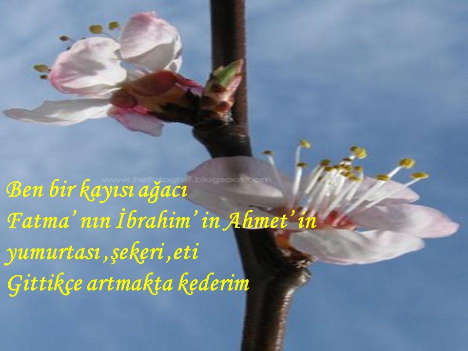 Ben bir kayısı ağacı Fatma' nın İbrahim' in Ahmet' in yumurtası ,şekeri ,eti Gittikçe artmakta kederim