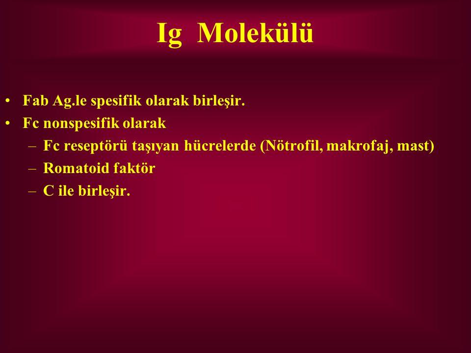 Ig Molekülü Fab Ag.le spesifik olarak birleşir. Fc nonspesifik olarak