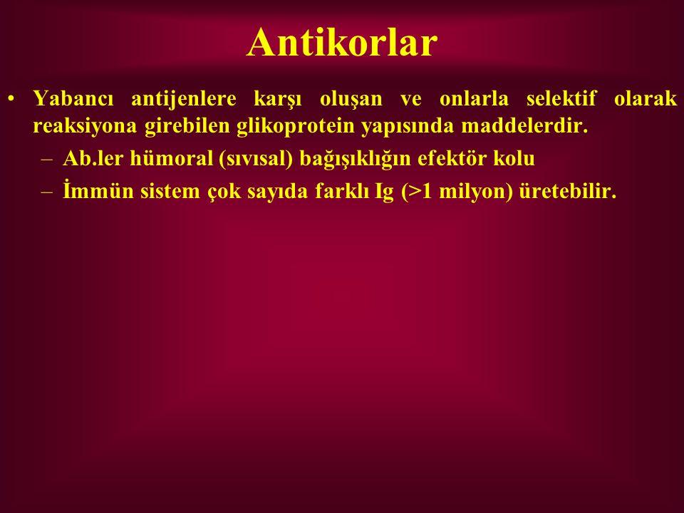 Antikorlar Yabancı antijenlere karşı oluşan ve onlarla selektif olarak reaksiyona girebilen glikoprotein yapısında maddelerdir.