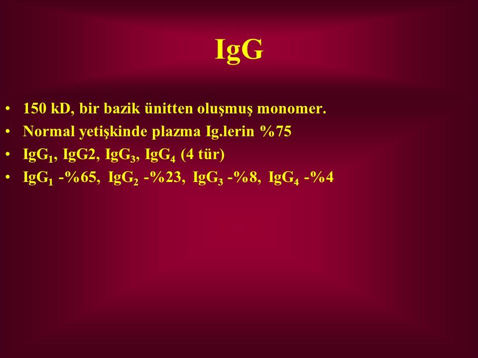 IgG 150 kD, bir bazik ünitten oluşmuş monomer.