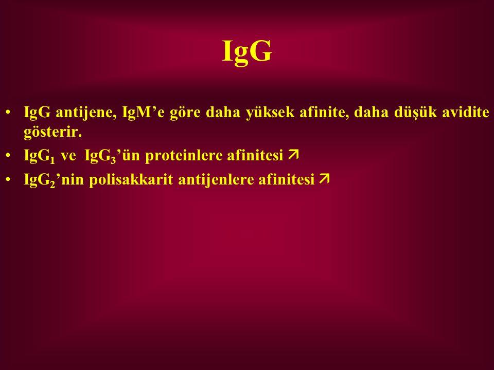 IgG IgG antijene, IgM'e göre daha yüksek afinite, daha düşük avidite gösterir. IgG1 ve IgG3'ün proteinlere afinitesi 