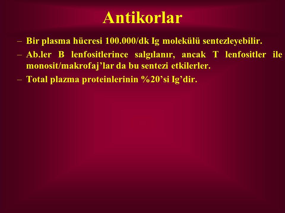 Antikorlar Bir plasma hücresi 100.000/dk Ig molekülü sentezleyebilir.