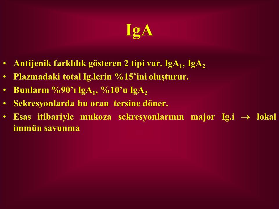 IgA Antijenik farklılık gösteren 2 tipi var. IgA1, IgA2