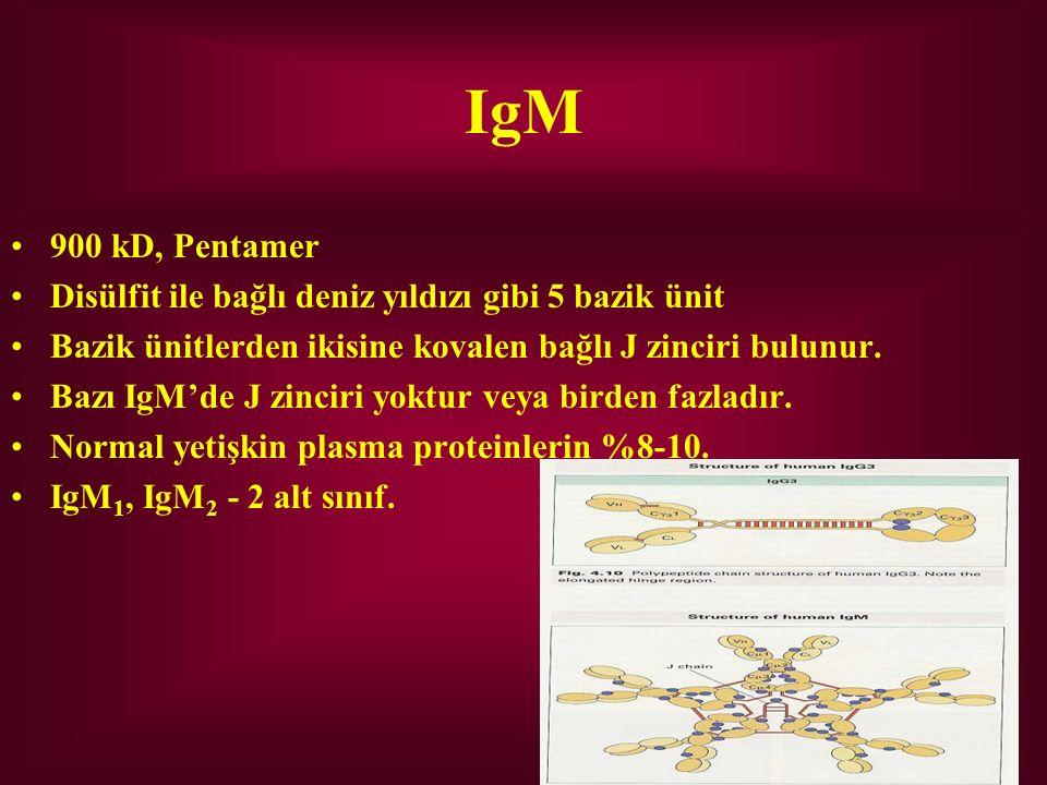 IgM 900 kD, Pentamer. Disülfit ile bağlı deniz yıldızı gibi 5 bazik ünit. Bazik ünitlerden ikisine kovalen bağlı J zinciri bulunur.