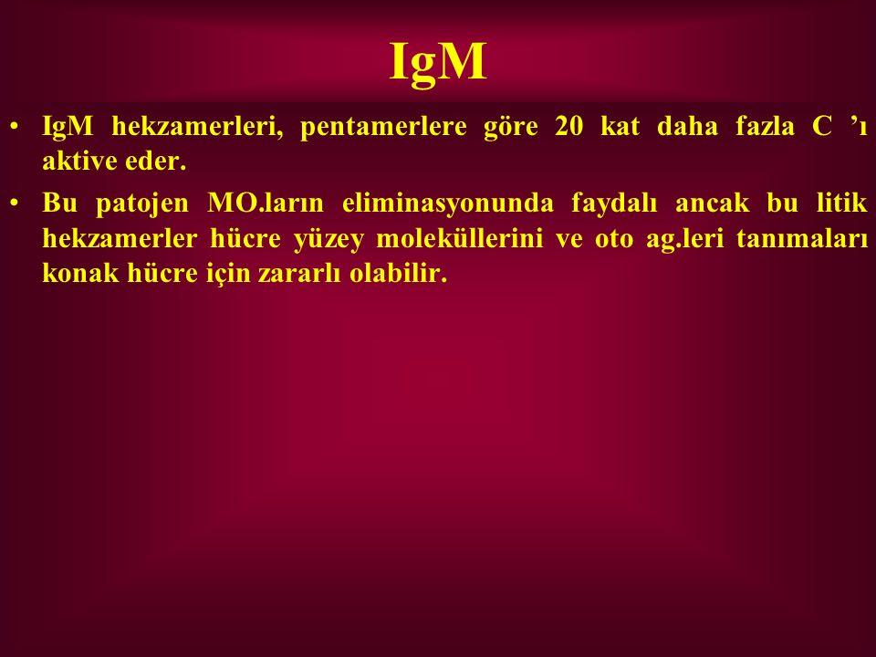 IgM IgM hekzamerleri, pentamerlere göre 20 kat daha fazla C 'ı aktive eder.