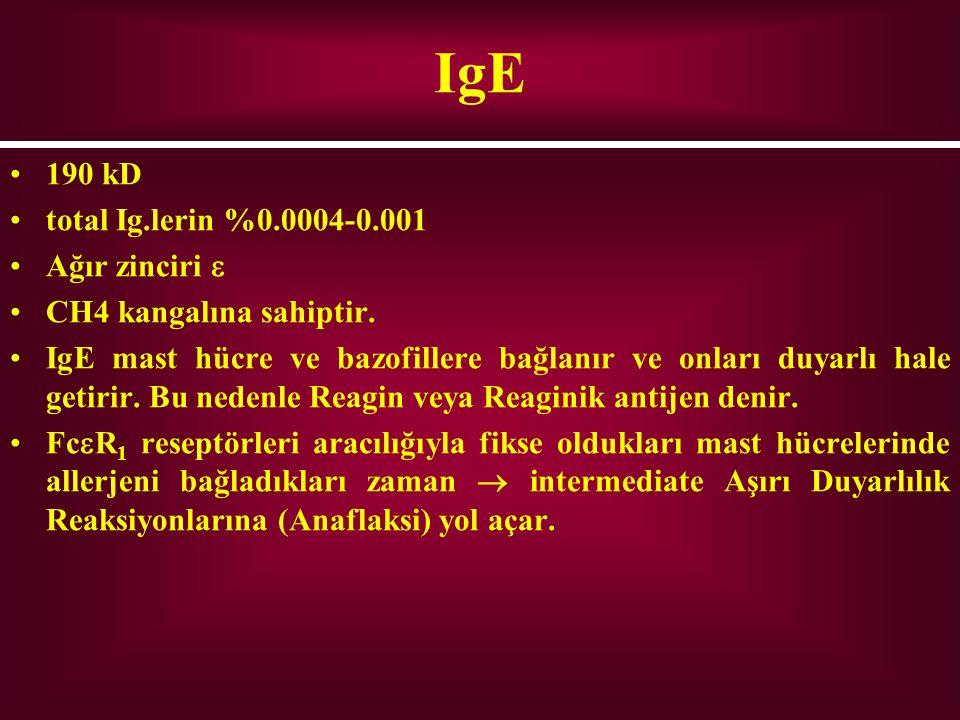 IgE 190 kD total Ig.lerin %0.0004-0.001 Ağır zinciri 