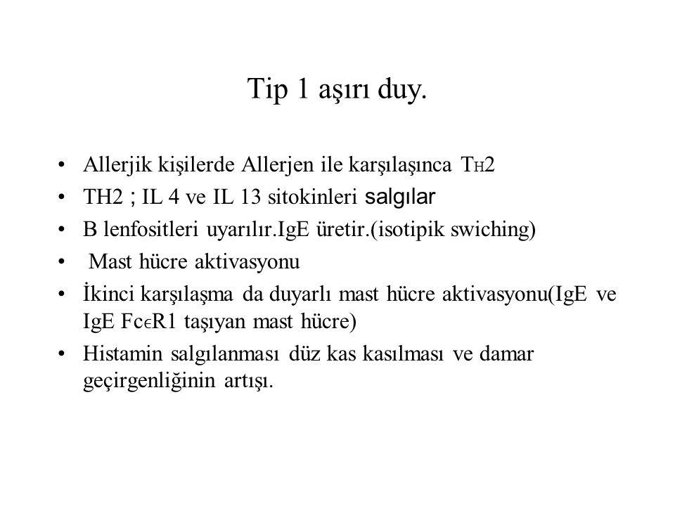 Tip 1 aşırı duy. Allerjik kişilerde Allerjen ile karşılaşınca TH2