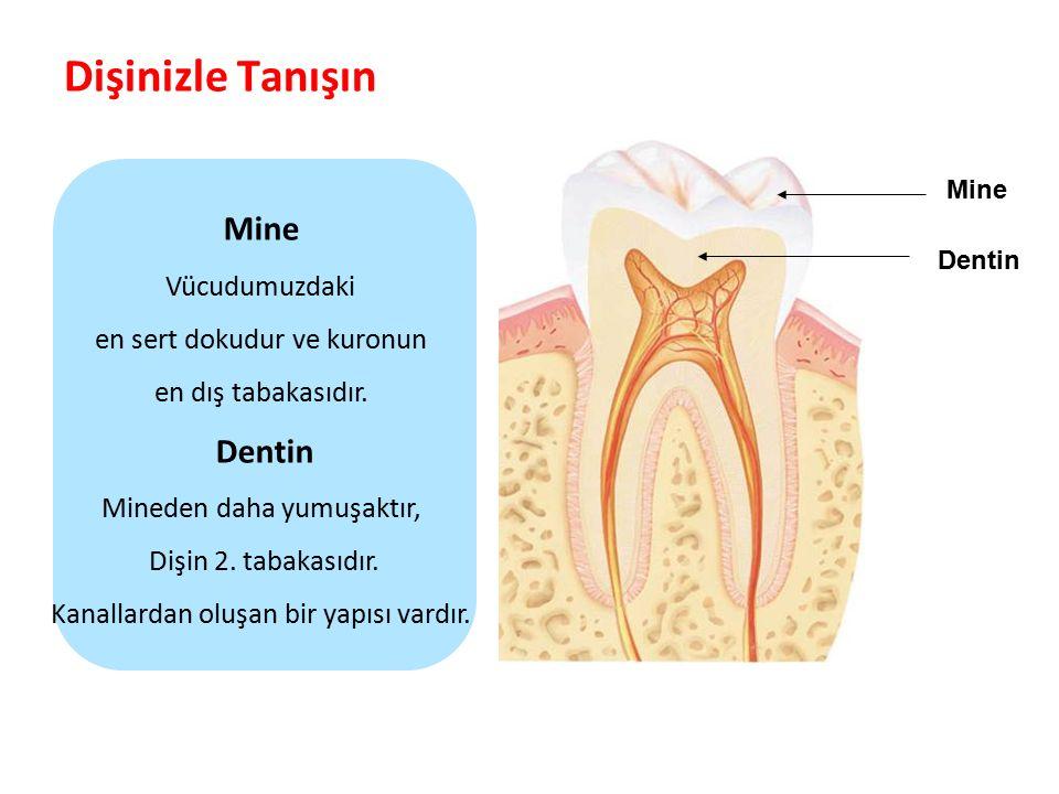Dişinizle Tanışın Mine Dentin Vücudumuzdaki en sert dokudur ve kuronun
