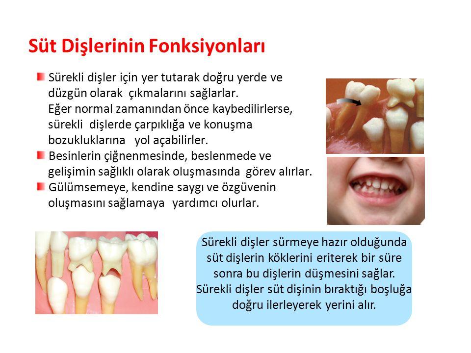 Süt Dişlerinin Fonksiyonları