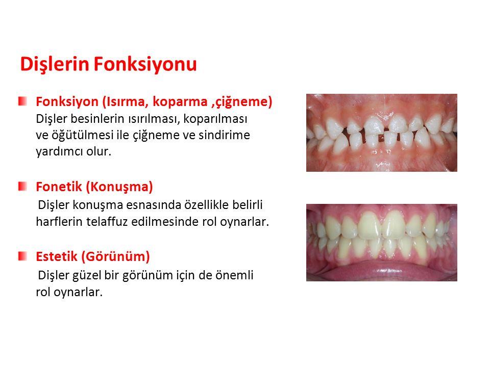 Dişlerin Fonksiyonu Fonksiyon (Isırma, koparma ,çiğneme)