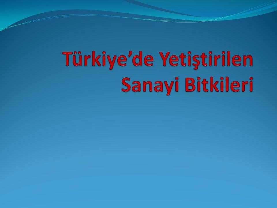Türkiye'de Yetiştirilen Sanayi Bitkileri